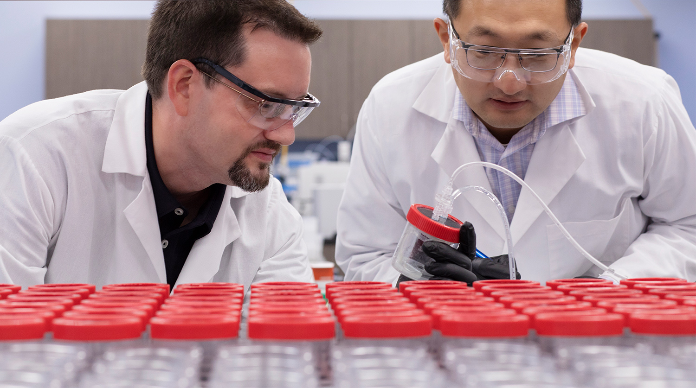 Laboratory technicians looking at sample jars